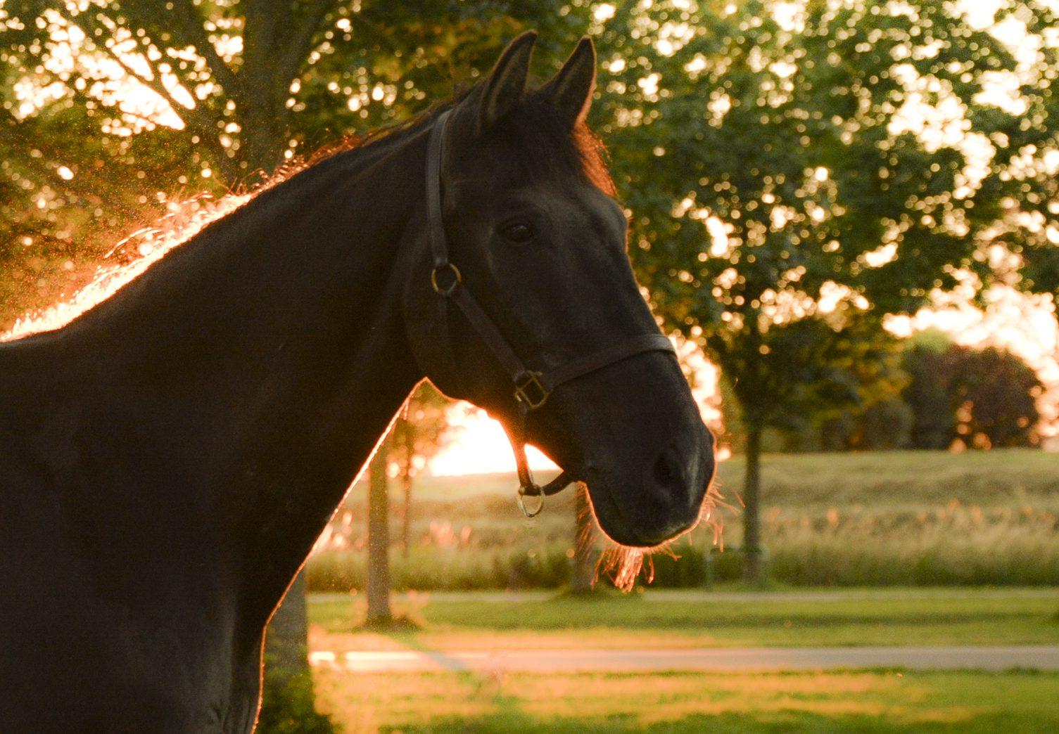 Paardensportvereniging Troje